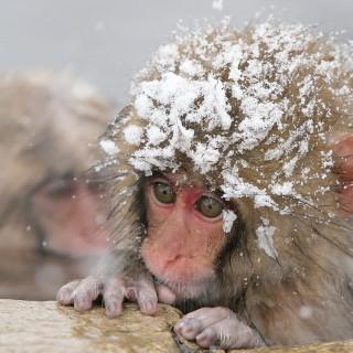 Funky, Monkey, Fun Ski